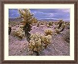 Framed Art Print 'Teddy Bear Cholla cacti, Joshua Tree National Park, California' by Tim Fitzharris