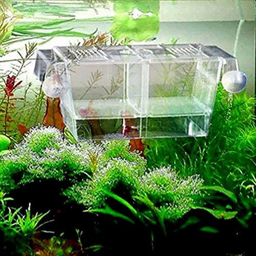 Zeroyoyo transparent plastic 4in1 floating fish hatchery for Aquarium fish trap