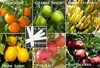 Yum Fruit Combo Pack Lemon Tree, Banana Tree, Clementine Tree, Apple Tree (Organic) 45+ Seeds 646263362020 Self Fertile + 6 Free Plant Marker
