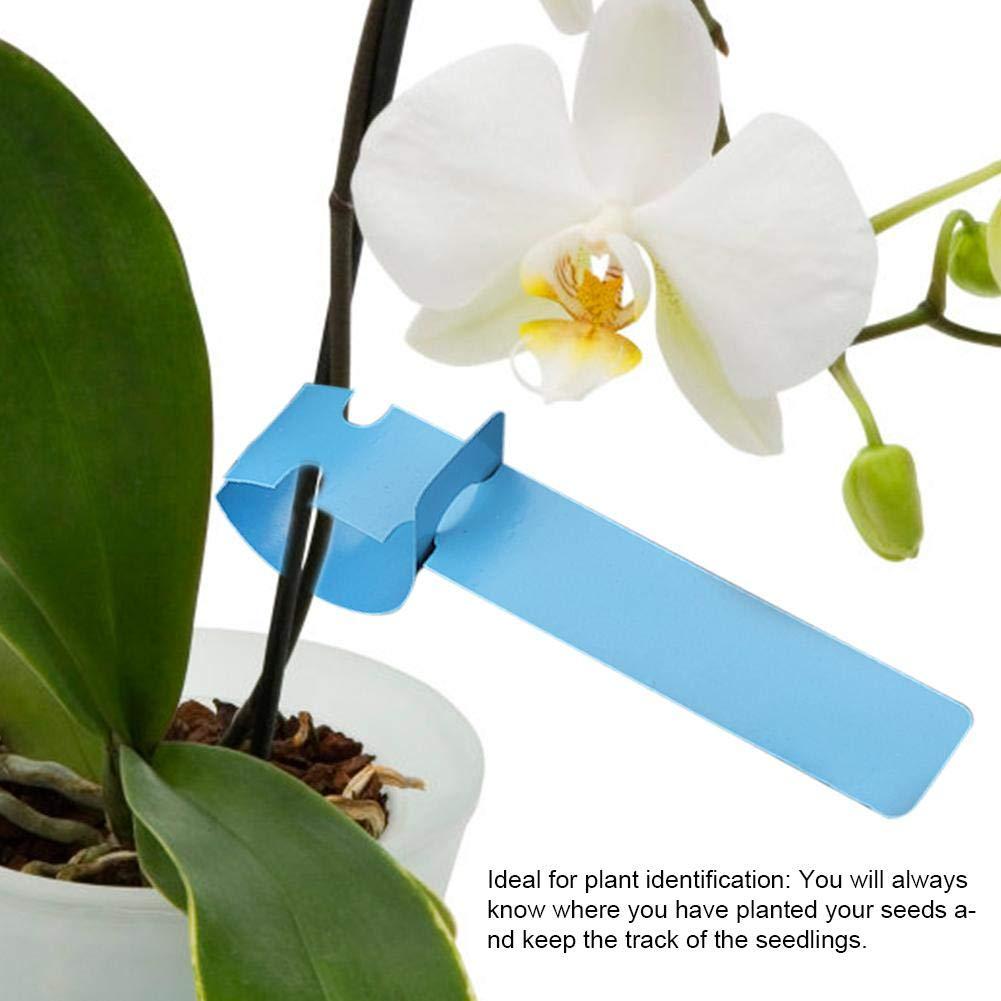 2 cm Etiquetas de los /árboles pl/ástico plantas marcadores 100 unids envolver alrededor colgando vivero decoraci/ón jard/ín etiquetas reutilizables adorno c/ésped 21 Azul