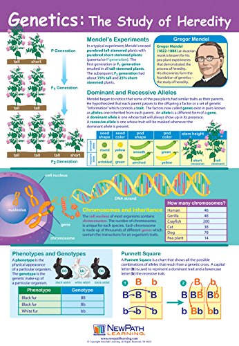 Genetics: The Study of Heredity Poster - Laminated, Full-Color, 23