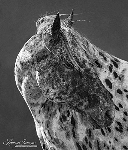 Appaloosa Horse Breed Gift Ideas for Horse Crazy Girls and