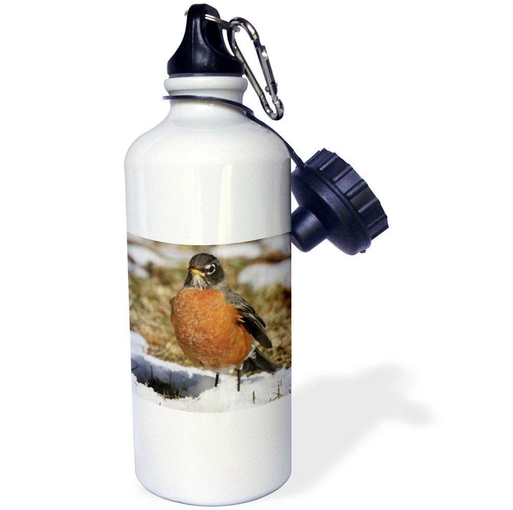 White 21 oz 3dRose wb/_116915/_1American Robin Turdus migratorius Bird Photo Animal Photography Sports Water Bottle