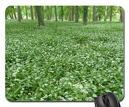 Mouse Pad - Bear Garlic Flowers White Forest Plant