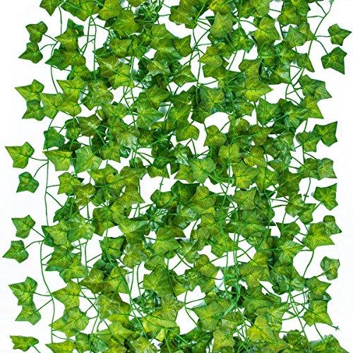 english ivy bush - 7