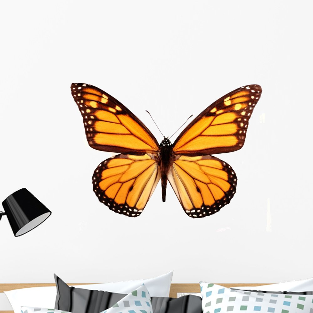 Wallmonkeys Monarch Butterfly Wall Decal Peel and Stick Animal Graphics (36 in W x 26 in H) WM154546