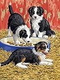 Cheap Caroline's Treasures ASA2079GF Border Collie Pups Garden Size Flag, Small, Multicolor