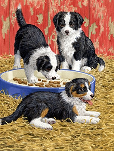 Cheap Caroline's Treasures ASA2079GF Border Collie Pups Garden Size Flag, Small, Multicolor