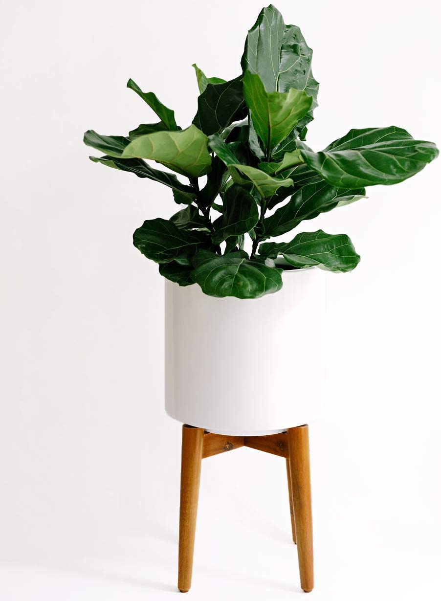 Large Mid Century Modern Glossy White Planter Pot with Wooden Stand. Perfect for House Plants, Modern Home and Office Decor, Poly Resin Planter Pot Included Finch Supply Co.
