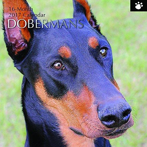 """Beautiful Photographs of Dobermans - 2017 Monthly Wall Calendar - Doberman Pinscher - Animal Dog Breeds - 16 Month Wall Calendar, Multicolor, 12"""" x 12"""""""