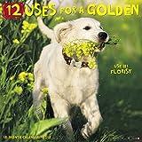 12 Uses for a Golden 2018 Wall Calendar (Dog Breed Calendar)