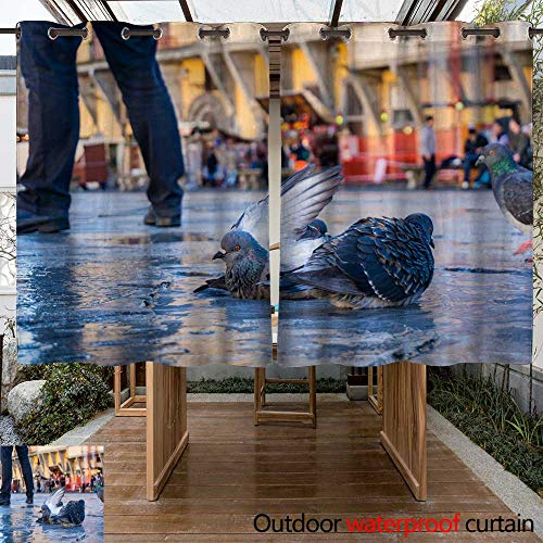 WinfreyDecor Home Patio Outdoor Curtain Pigeons bathe in rain Puddles Piazza de Santa Croce Florence Italy W55 x L72