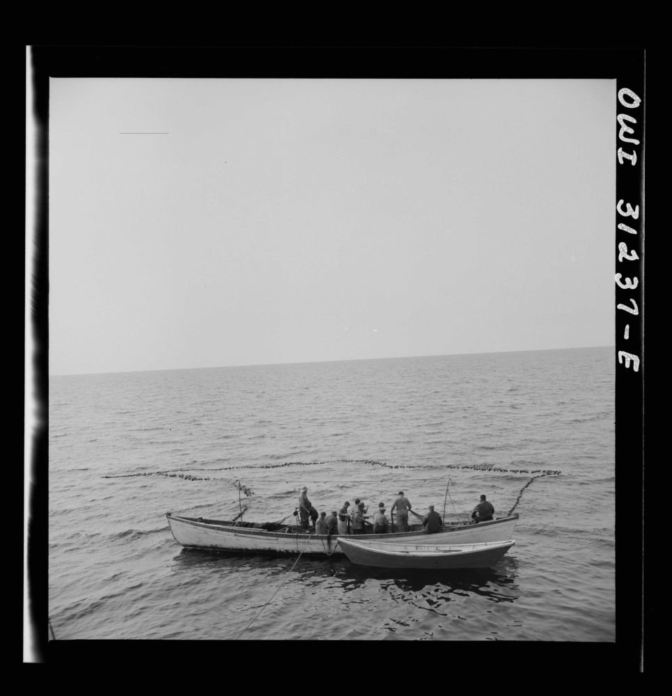 1943''On board the fishing boat Alden, out of Gloucester, Massachusetts. Fishermen pulling in their net, in which they hope to have trapped a school of mackerel.