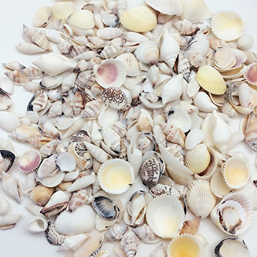 PEPPERLONELY Sea Shells Mixed Light Colored, Various Size, 1 Inch to 2-1/4 Inch, 1000 Gram, Apprx. 250PC Sea Shells ()