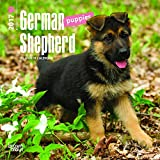 German Shepherd Puppies 2017 Mini 7x7