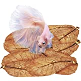 SunGrow Catappa Leaves, Keep Betta and Other Aquarium Pets Healthy, Indian Almond Leaf Acts as Water Conditioner and Assists in Recovery, Helps with Color Improvement of Fish, 10 Leaves per Pack