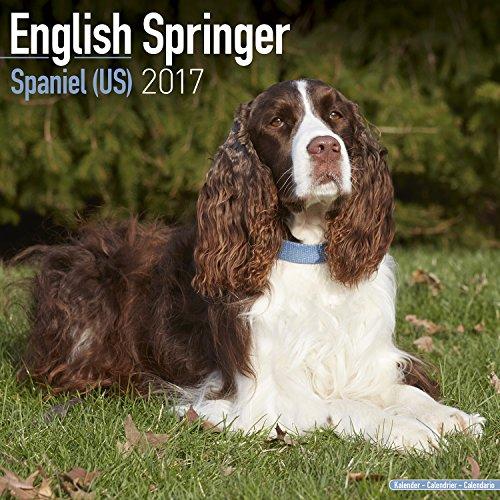 English Springer Spaniel Calendar Calendars