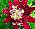 New Arrival!10 seeds/Lot Passion Flower Seeds Vine Fruit Passiflora bonsai plant Seeds DIY home garden,#JF0TRH