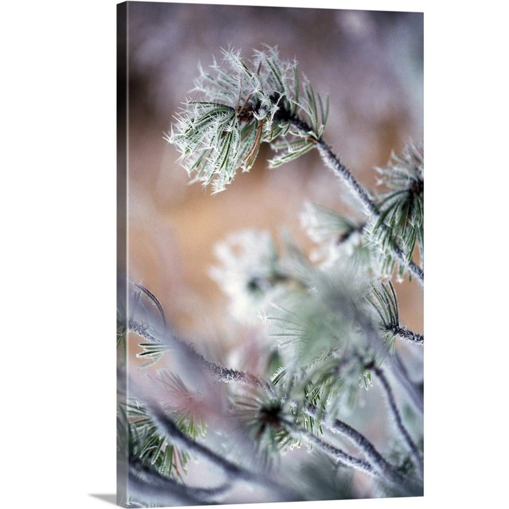 Craig Tuttleギャラリー‐ Frost On Pine Tree Branches 40