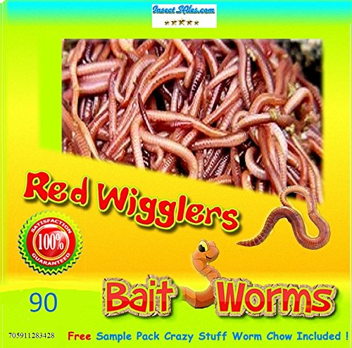Insectsales.com Red Wigglers (90 Count) Live, Healthy Red Worms for Composting & Fishing Bait ()
