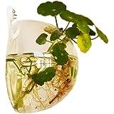 Jungen 10 cm Acrílico Mini transparente redondo soporte de pared pecera tanque Flores Plantas…