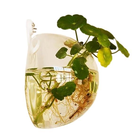 Jungen 10 cm Acrílico Mini transparente redondo soporte de pared pecera tanque Flores Plantas Jarrón Decoración del hogar: Amazon.es: Hogar