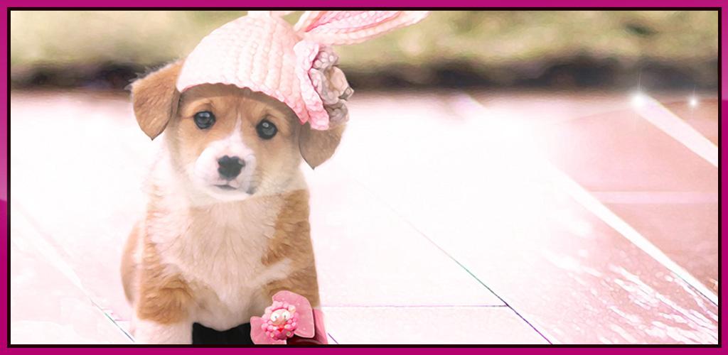 Cute Puppy Interactive Live Wallpaper: Amazon.com.au