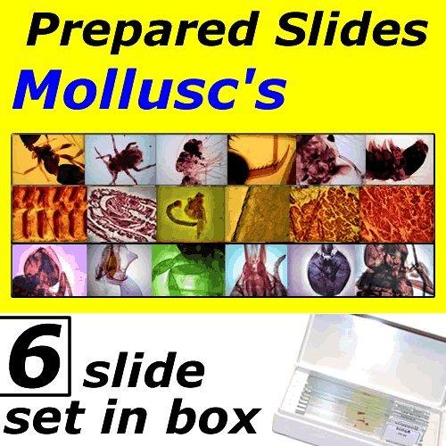 Prepared Slides - Molluscs (Set of 6) UKGE
