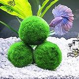 4 luffy marimo moss balls aesthetically for Betta fish moss ball