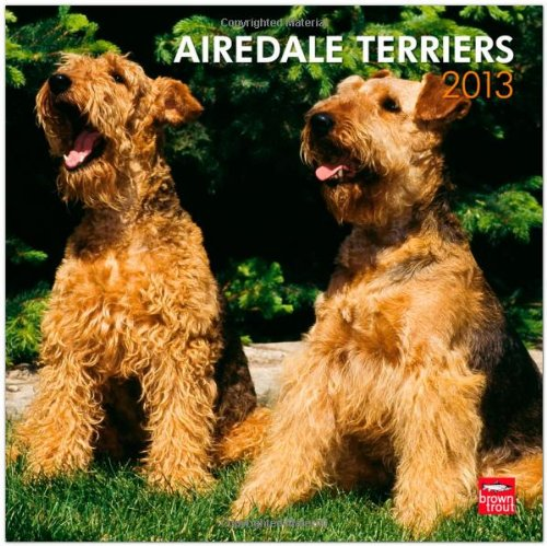 Airedale Terriers 2013 Square 12X12 Wall Calendar (Multilingual ()