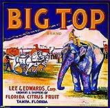 Tampa Florida Big Top Brand Orange Citrus Fruit Crate Box Label Art Print Travel Advertisement Poster. Label measures 10 x 10 inches