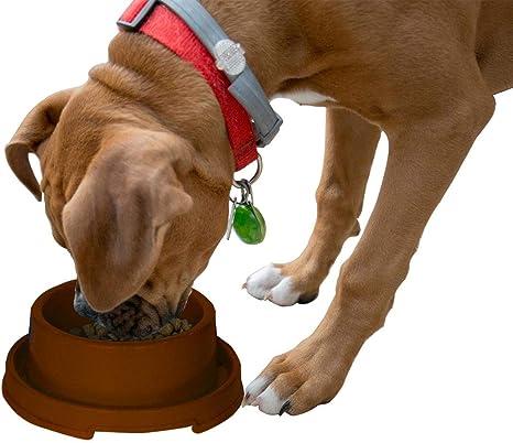 PetLike - Cuencos elevados para Mascotas, sin derrames, para ...
