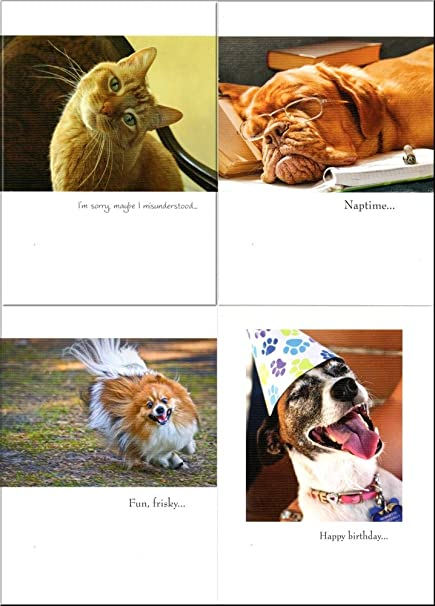 FUNNY 100 BIRTHDAY CARDS BEST BULK BUY VALUE ANIMAL AND DOG CAT THEMED GREETING