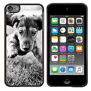 Dachshund Doxie del perro de perrito Negro Blanco- Metal de aluminio y de plástico duro Caja del teléfono - Negro - iPod Touch 6