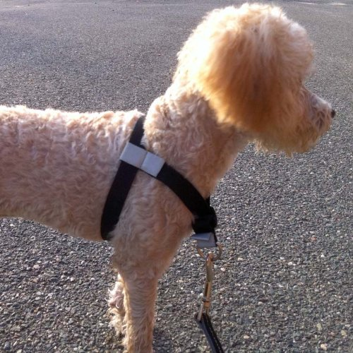 Walk Your Dog With Love, No-Pull Front-Attachment Harness (Black Night, 55-120 pounds) by Walk Your Dog With Love (Image #2)