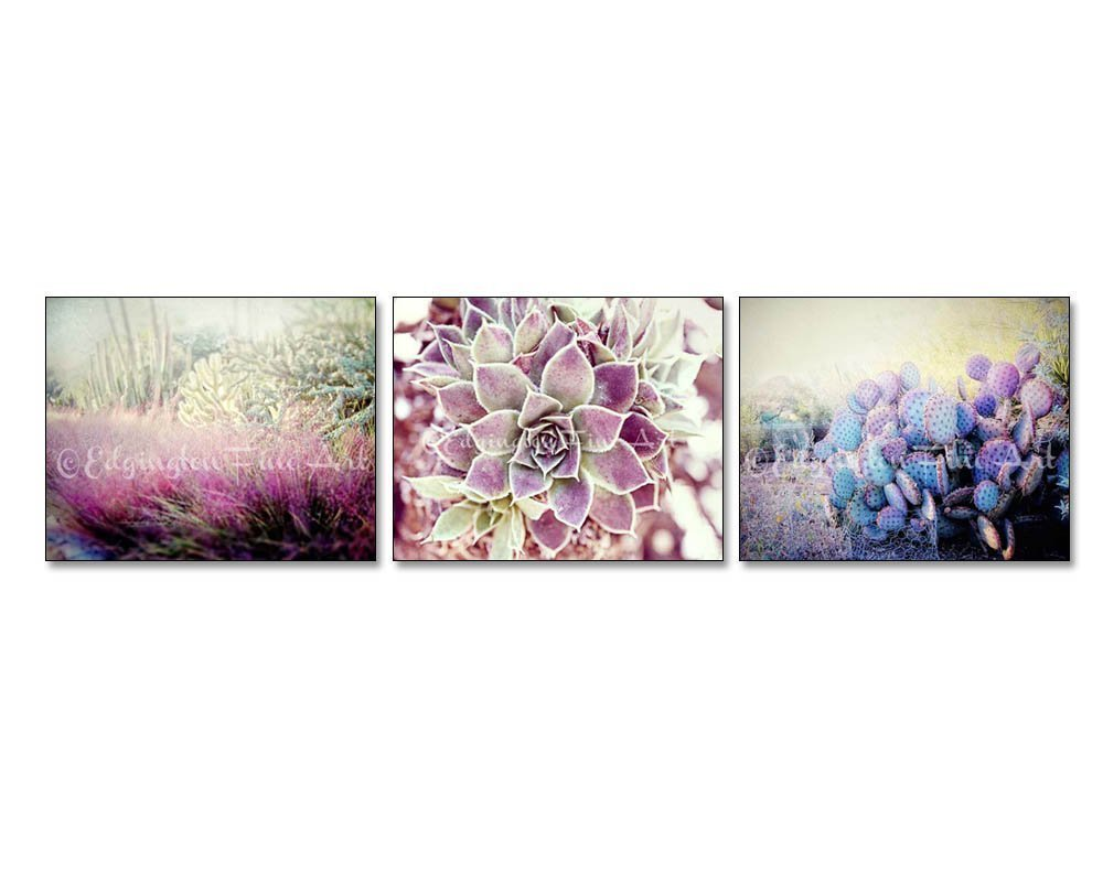 Set of 3 Desert cactus photos nature photography 5x7 inch prints