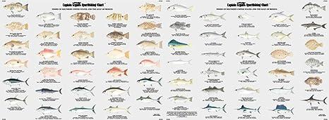Amazon com fish of florida gulf of mexico identification chart