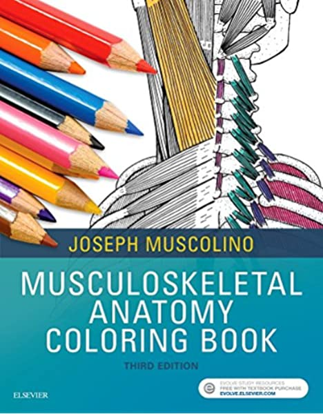 - Musculoskeletal Anatomy Coloring Book: 9780323477314: Medicine & Health  Science Books @ Amazon.com