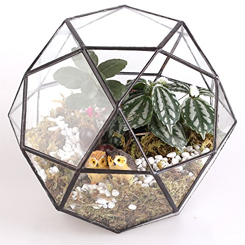 Triangular Coat (Modern Artistic Clear Glass Geometric Terrarium Triangular Pentagon Mix 32-Sides Succulent Fern Moss Bonsai Flower)