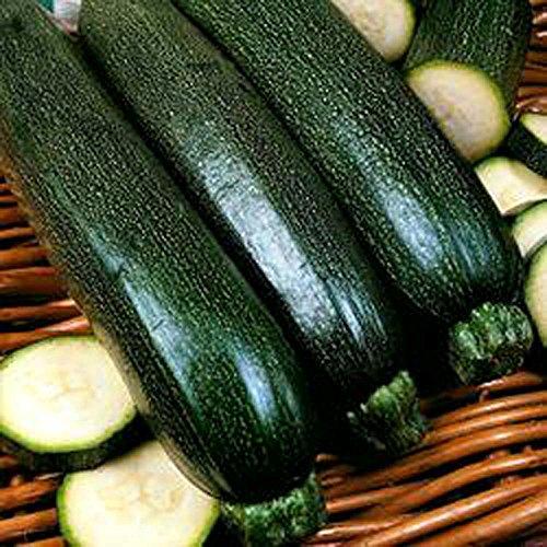 zucchini-squash-dark-green-zucchini-squash-seeds-organic-non-gmo-200-per-pkg