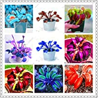 100 pcs/Bag Dionaea muscipula Giant Clip Venus Fly Trap Seeds insectivorous Garden Plant Bonsai Family Rare Potted Plants: Mixed