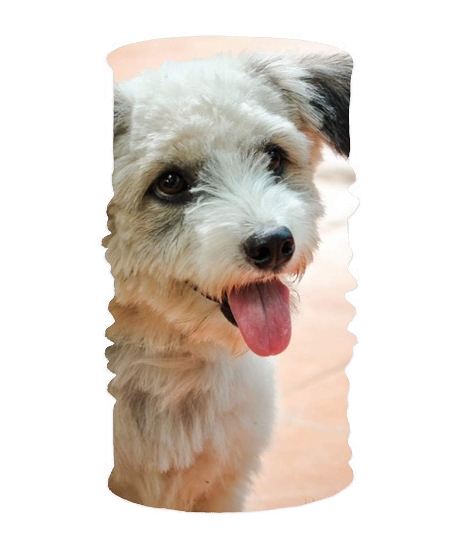 yiyuanyuantu Magic Scarf Boston Terrier Dogs Headband, Comfy Face Bandana Mask Breathable Headwrap