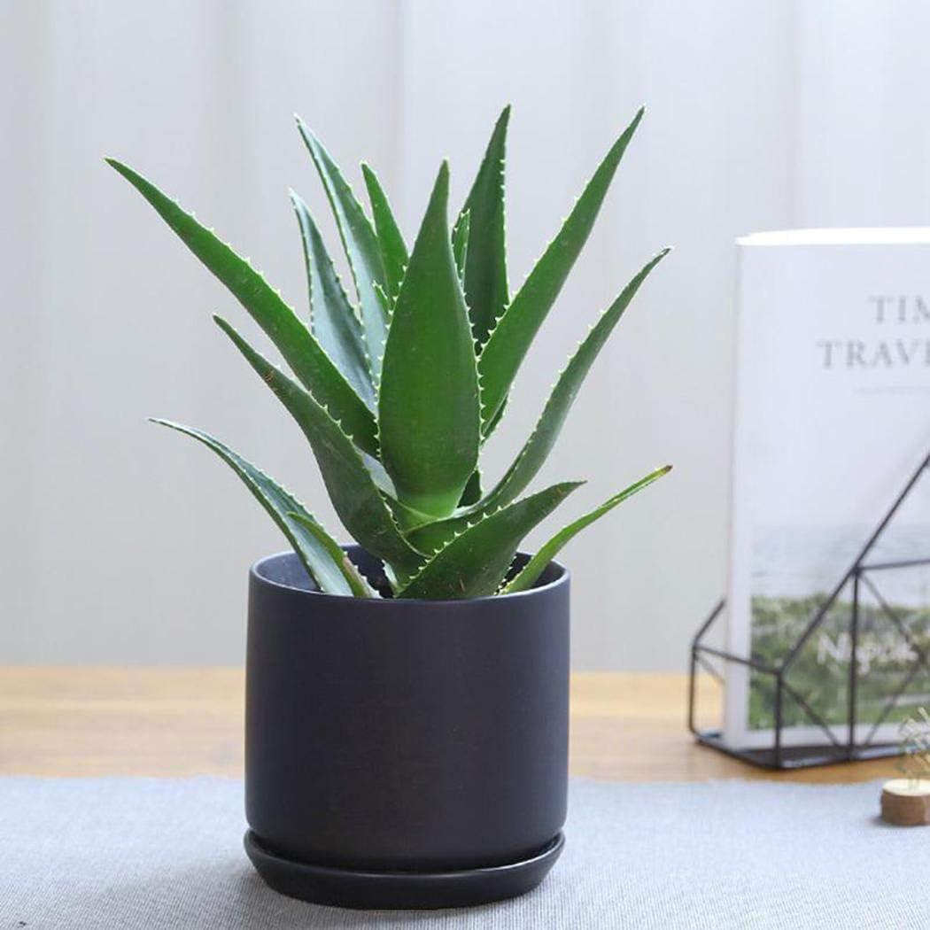 100pcs Aloe Vera Seeds Succulent Plant Herbal Medicinal Vegetables Cacti /& Succulents High Yielding Vegetable Seeds for Planting Garden Seeds ROCONAT Garden Seeds