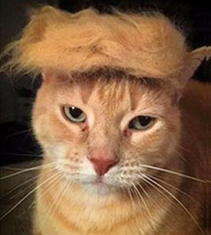 Trump Style Cat Wig Pet Costume, Donald Dog Head Wear Apparel Toy for Halloween,