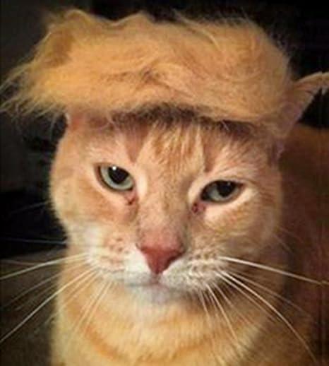 Fuji Peluca de Gato para Mascota, Disfraz de Cabeza de Perro ...