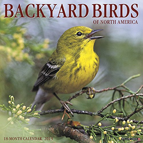 Backyard Birds 2019 Calendar