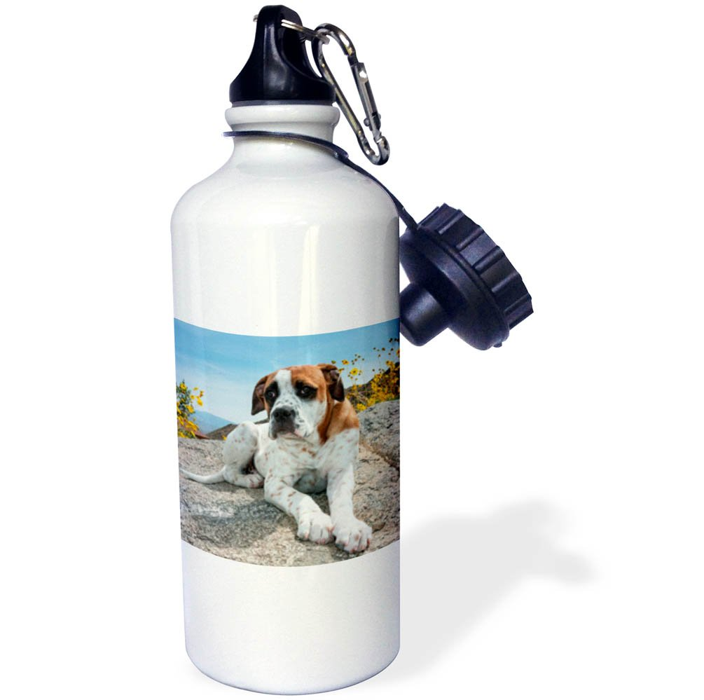 21 oz Sports Water Bottle Dogs 3dRose Danita Delimont American Bulldog Puppy Rests on a Boulder wb/_258162/_1 MR