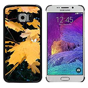 "Pulsar Snap-on Series Teléfono Carcasa Funda Case Caso para Samsung Galaxy S6 EDGE / SM-G925(NOT FOR S6) , Otoño Otoño Amarillo Rain Tree Naturaleza"""