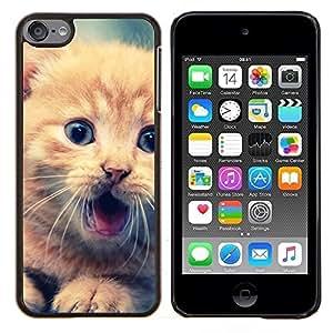 Qstar Arte & diseño plástico duro Fundas Cover Cubre Hard Case Cover para Apple iPod Touch 6 6th Touch6 (Lindo Gatito anaranjado)