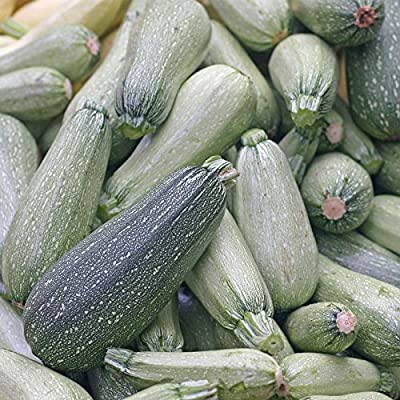 Grey Zucchini Summer Squash Garden Seeds - Non-GMO, Heirloom - Vegetable Gardening Seed - Gray